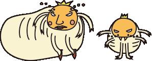 ヤマトシロアリ女王と王