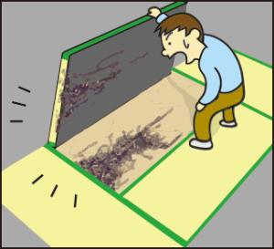 畳にもシロアリ被害